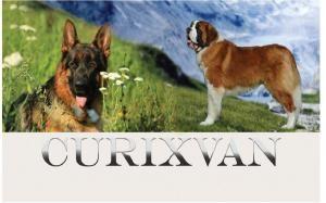"""Питомник собак """"CURIXVAN"""""""
