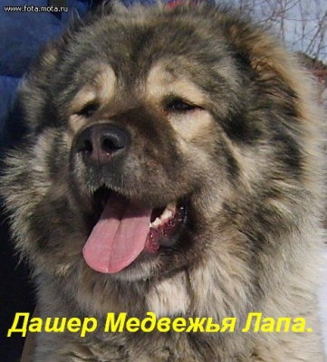 "Питомник собак ""Кавказская овчарка"""