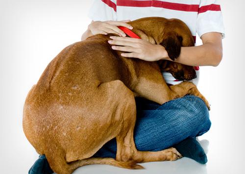 Как успокоить собаку