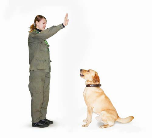 Обучение командам собаки