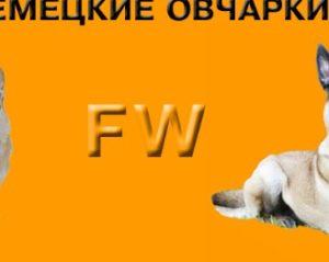 FreiWind